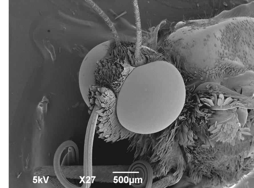 電子顕微鏡でミクロの世界をみてみよう!